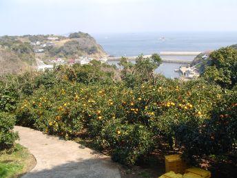 テレビ放送された甘夏かあちゃんの甘夏畑から玄界灘を望む